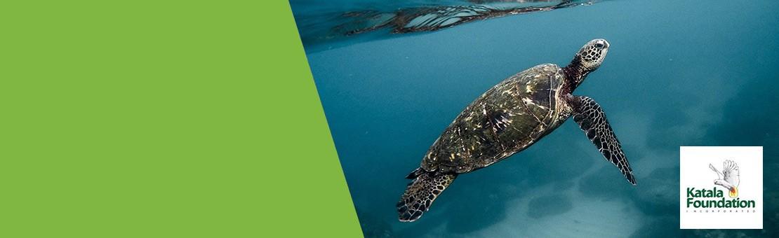 Protección de las tortugas - Katala Foundation
